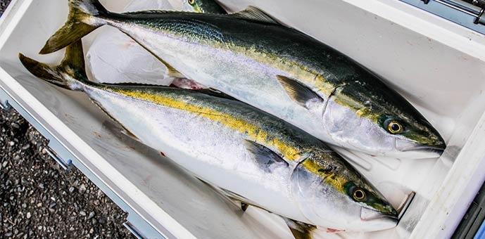釣れる魚の種類が豊富